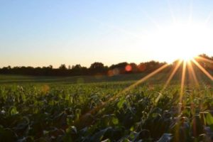 Como funciona o seguro agrícola?